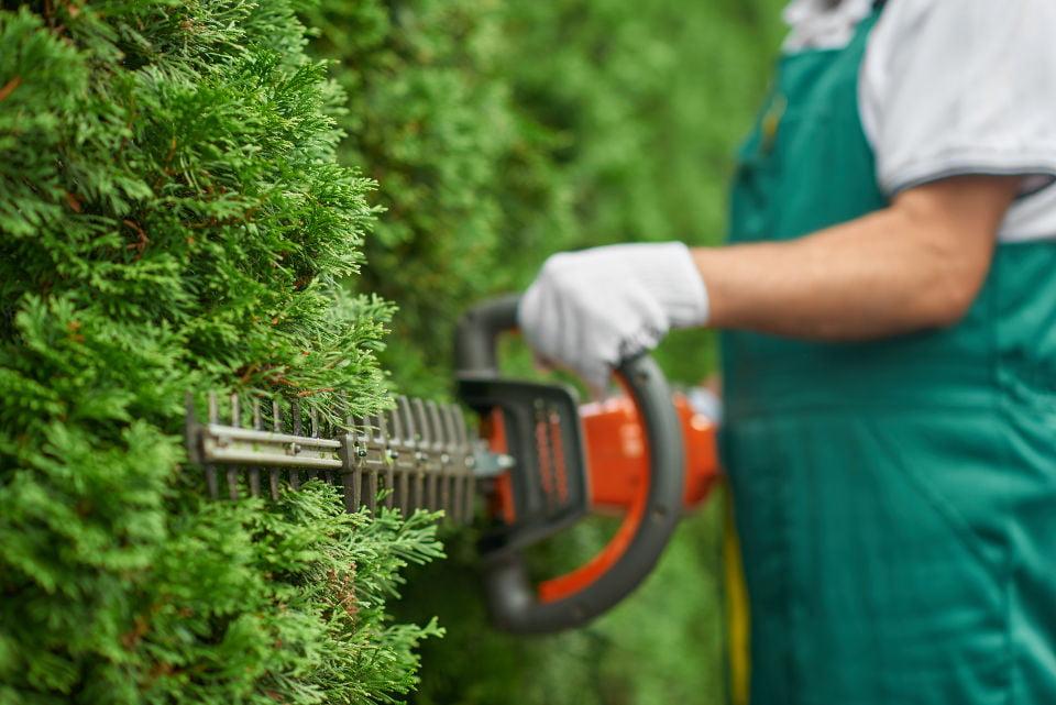 Utrzymanie zieleni, koszenie